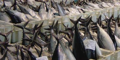 sectores pescado